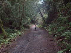0802 Distant Trail (mliu92) Tags: purisimacreek redwood preserve halfmoonbay hiking cubscouts