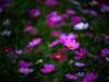 Secret Garden (3dgor 加農炮) Tags: secretgarden flower minolta rokkorrf