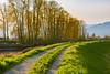 Tractor Path (briantolin) Tags: mapleridge britishcolumbia dyke river creek stream water landscape path nature