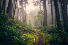 Where to? (West Leigh) Tags: trail trailrunning hike nature naturalbeauty forest trees challenge passion wanderlust wander dream discover explore experience green oregon oregoncoast mist weather
