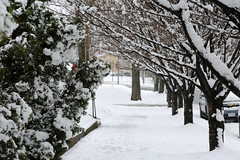 DC Snow - March 2018 (zmotoly) Tags: washingtondc weather snow storm winter