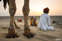 Camel Man in Desert (David_Lazar) Tags: india rajasthan thar camels desert