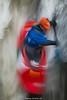 D4S_0192 (Chris Worrall) Tags: 0817142 2018 action chrisworrall competition competitor copyrightchrisworrall dramatic exciting geotagn51551708e0817412 photographychrisworrall playboat postcodesl72eb power speed sport watersport aeroplane canoe cold freestyle hurley hurleyclassic hurleyweir kayak theenglishcraftsman worrall
