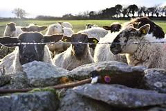 DSC_7907 (seustace2003) Tags: baile átha cliath ireland irlanda ierland irlande dublino dublin éire glencullen gleann cuilinn st patricks day lá fhéile pádraig