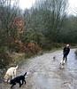 Paddy, Skye, Pretzel & Mango trying out a new walk. (waggytailsdogwalkers) Tags: funwithdogs professionaldogwalkers dogshavingfun dogs dog dogwalker dogwalkers