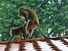 Sentosa, Singapore, November 11th 2008 (Southsea_Matt) Tags: november 2008 autmn canon 30d singapore sentosa monkey sex
