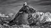 Surf seal. (waynedavey67) Tags: canon canon7dmkii 7dmkii 600mmlf4 seal mammal animal beach sea surf waves winterton norfolk uk wildlife nature outdoors outside monochrome blackandwhite bw bwartaward