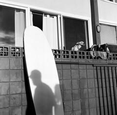 sundaze (gguillaumee) Tags: film analog grain mediumformat rolleiflex dog board shadow america sun candid street streetphotography usa fujineopan 100iso venicebeach