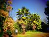 IMG_1448.jpg (xposed59405) Tags: trees 511mm lightpost sign 1640sec brightsun morningsun bushes iso80 sunnyday palmtree f35 bluesky