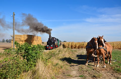 Px38-805 (Radosław Matysek) Tags: px38 px38805 narrow gauge steam żnińska kolej powiatowa rydlewo wenecja poland