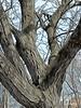 HTMT TREE-MENDOUS TUESDAY IN VINCI (Visual Images1 (Thanks for over 5 million views)) Tags: tree vinci htmt treemendoustuesday