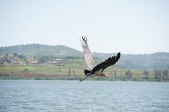 Jinja-H18_6240-2 (Carl LaCasse) Tags: uganda jinga lakevictoria nile river source people smile birds fishishing sunset beauty