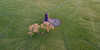 Black Mill (AndyCB) Tags: drone dji mavicpro mavic aerial lanscape england yorkshire east grass mill paths