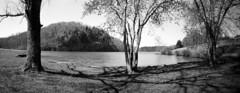 Melton Hill Park (lancekingphoto) Tags: meltonhillpark lake waterfront recreation trees pinhole clipper6x18 fujineopanacros100 120film mediumformat blackandwhite knoxville tennessee thesouth clinchriver cliffs