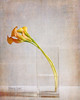 Calla Lilies in Vase (Duckprints) Tags: april2018 dugan daffodils flowers narcissus snowdrops spring tulips