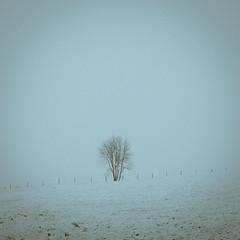 Minimalisme (pixdelight) Tags: minimalisme monochrome tree arbre landscape panasonic lumix gx7 normandie normandy