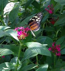 IMGP9106 (Steve Guess) Tags: museum horniman forest hill london england gb uk butterflys butterflies house flowers