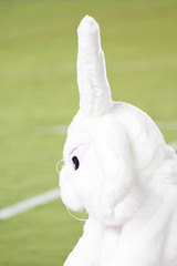 Sharks v Storm Round 4 2018_101.jpg (alzak) Tags: 2018 australia cronulla easter league melbourne nrl national rugby sharks storm sydney action bunny mascot rivalry sport sports