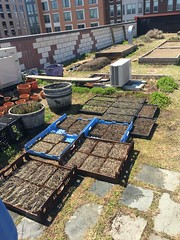 Beginning of 2018 NW Rooftop Garden growing season.