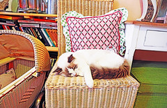 Prague (kirstiecat) Tags: prague praha caturday prag czechia czech catcafe meow purr catnap kitty feline gato chat