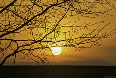 Easy goin' evening..... (Joe Hengel) Tags: easygoinevening ephrata ephratapa pennsylvania pa tree treebranch treebranches sunset silhouette silhouettes sun orange horizon evening eveninglight eveningskies lancastercounty 7dwf