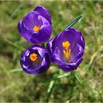 a Spring Painting thumbnail