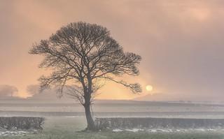 Lone Tree Rise