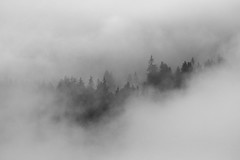 fog II (GeoMatthis) Tags: forrest black blackandwhite blackwhite fog rain clouds tree contrast blur