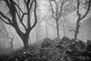 Dark forest (MarioCibulka) Tags: forest fog landscape nature mystery magic fantasy dark misty darkness morning weather nightmare shadow fear woods monochrome mysterious environment outdoor natural mystical overcast blackandwhite place beauty travel wild fairytale hiking