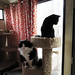 Two cats thinking