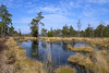 im Moor (hph46) Tags: tisterbauernmoor tiste niedersachsen deutschland germany swamp sony alpha6500 canonef1635mm14lisusm
