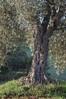 IMGP5763 (jamin.sandler) Tags: pentaxistds smc macrotakumar 100mm