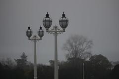 Light rain (neil.bather@xtra.co.nz) Tags: light rain auckland domain new zealand grey wet weather lamps