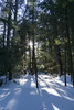 Dukes Research Natural Area, February 2018-7 (Nathan Invincible) Tags: dukes research naturalarea dukesresearchnaturalarea upperpeninsula up michigan michigansupperpeninsula mi marquette marquettecounty winter ski backcountry backcountryski snow oldgrowth forest usforestservice woods hemlock hemlocks