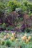 Cerrado em cor (Johnny Photofucker) Tags: rolamoça brumadinho mg minasgerais brasil brasile brazil cerrado cor colore colour vegetação 24105mm lightroom campo field natureza natura nature