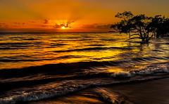 Nudgee Beach Queensland Australia (Peter Cabral Photography) Tags: beach sunrise ocean australia queensland tropics tropical i love job brisbane brisbanephotographer pacific canon canon5ds 50megapixel