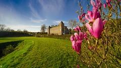 Flowers and Castle (YᗩSᗰIᘉᗴ HᗴᘉS +15 000 000 thx) Tags: flowers spring castle namur belgium bluesky hensyasmine yasminehens laowa 12mm