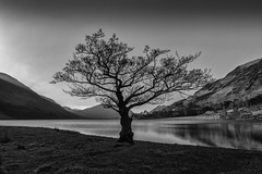 Buttermere, Lake District (alexcalver) Tags: sigma1750mmf28 canon80d uk cumbria england lakedistrict blackwhite lonetree buttermere