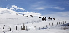 Horses on a hill (John Andersen (JPAndersen images)) Tags: calgary clouds farm horses mountains pond reflections rockies sky skyline spring trees