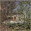 xhoffraix 17 (beauty of all things) Tags: belgien belgium xhoffraix hohesvenn quadratisch hecken hedges throughthetrees