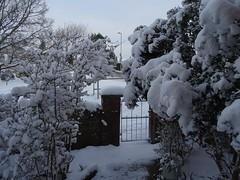 Garden accumulation (Phil Gayton) Tags: snow bush garden gate totnes devon uk