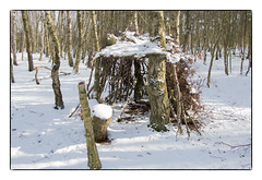 Shelter. (47mki) Tags: woodland shelter snow birchtrees branches logs trees