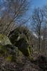 Wald- Luminale-bw_20180324_5781.jpg (Barbara Walzer) Tags: 240318 frühlingswald königsteinimtaunus licht luminale wald