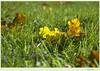 Лирическое настроение (Tutchka) Tags: газон дуб желтый зеленый лето лирика лист павловск парк питер последнийденьлета природа сезон смена солнце трава цвет