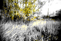 POP (ralfdaenicke) Tags: pop spring frühling gras grass yellow gelb highcontrast hochkontrast sigma1020mm bokeh pentax k3