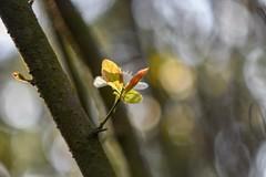 Sunny April day. (agnieszka.a.morawska) Tags: helios44m nikon helios flower dof wiosna beyondbokeh bokehlicious bkhq sunlight spring bokeh