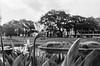 60580033 (Longfei@Photography) Tags: streetphotography blackandwhit blackandwhitephotography filmphotography analogphotography sydney australia nikonfe2 nikonfm2 voigtlander58nokton voigtlander40ultron olympusom2 olympus35sp