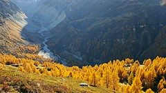 yellow.photons (Matt_étranger) Tags: zinal anniviers larici larch yellow autumn swss alps svizzera alpi trekking hiking nature landscape colour color colori alberi tree giallo arancio wallis vallese grimentz montagna mountain wild