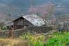 _J5K1915.0218.Mèo Vạc.Hà Giang. (hoanglongphoto) Tags: asia asian vietnam northvietnam northeastvietnam landscape scenery vietnamlandscape vietnamscenery vietnamscene hagianglandscape spring peachblossom house home tree rock flanksmountain hdr canon canoneos1dsmarkiii canonef2470mmf28liiusm đôngbắc hàgiang mèovạc phongcảnh phongcảnhhàgiang hàgiangmùaxuân hoađào hoacải ngôinhà sườnnúi hàngràođá stonefence