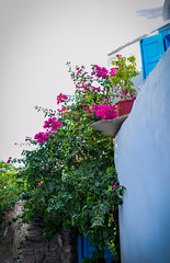 Spring vibes (n.tsourouflis) Tags: spring greene purple flowers tinos cyclades blue